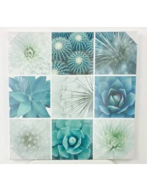 Painted on canvas succulents / white flowers Vacchetti