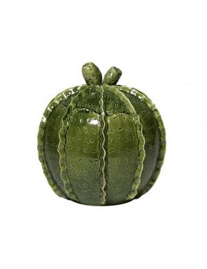Jar of Virginia casa  cactus  exotic line
